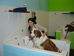 Self-wash your Pet at Dogma
